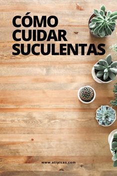 Care for succulents. Basic care for succulents. Learn how to care for succulents. Indoor Planters, Outdoor Plants, Growing Succulents, Starting A Garden, Succulent Care, Cactus Y Suculentas, Self Watering, Gardening For Beginners, Diy On A Budget