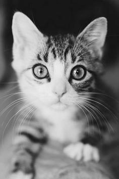 Cute Kitty Eyes.