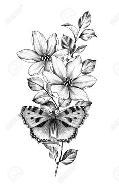 Stock Photo - Hand drawn butterfly with flowers isolated on white background. Pencil drawing monochrome insect and plants. Elegant floral composition in vintage style, t-shirt design, tattoo art. Black And White Flower Tattoo, White Flower Tattoos, Butterfly With Flowers Tattoo, Butterfly Drawing, Butterfly Tattoo Designs, Black Tattoos, Body Art Tattoos, Butterflies, Vintage Butterfly Tattoo