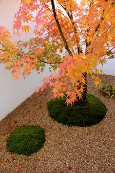 Japanese Taste, Prospect House, Japanese Garden Design, Small Gardens, Indoor Garden, Home Remodeling, Outdoor, Beautiful, Gardens