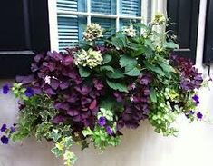 window boxes for shade - like the purple oxalis