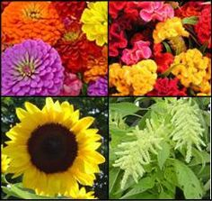 We sell cut-flower variety seeds with a free learning center on how to do it.