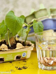 Taimikasvatuksen alkeet | Kotivinkki