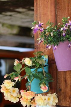 #TheGreenPot designed by Blooming Walls® Hanging Plants, Potted Plants, Unique Plants, Bloom, Walls, Colours, Green, Beautiful, Design