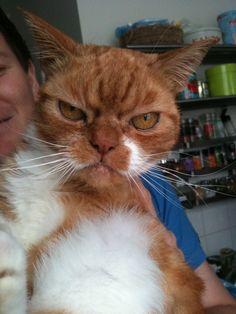 So you like grumpy cats? Meet Furby...