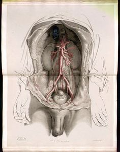Anatomy Illustrations in 2020 Human Anatomy Art, Anatomy Drawing, Hr Giger Art, Human Body Science, Anatomy Images, Greece Art, Medical Anatomy, Anatomy Poses, Medical Art
