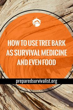 How To Use Tree Bark as Survival Medicine and Even Food How To Use Tree Bark as Survival Medicine and Even Food,outdoor survival Crucial Survival Techniques That Will Keep You Alive When Catastrophe Hits Skills