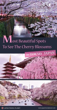 When is the best time to see the cherry blossoms in Tokyo? What should I do if I miss the peak season of the cherry blossoms? In this guide, we will provide answers to these questions and share… Tokyo Japan Travel, Japan Travel Guide, Asia Travel, Japan Trip, Kyoto Japan, Okinawa Japan, Cherry Blossom Japan, Japanese Cherry Blossoms, Les Continents