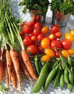 Овощи в саду😍🍅🌱🥕