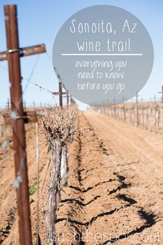 Sonoita & Elgin Arizona wine trail :: best winery & tasting tips from a frequent visitor