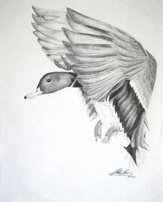 Choose your favorite duck sketch drawings from millions of available designs. All duck sketch drawings ship within 48 hours and include a money-back guarantee. Cool Pencil Drawings, Bird Drawings, Realistic Drawings, Animal Drawings, Drawing Sketches, Sketching, Duck Hunting Tattoos, Hunting Drawings, Duck Tattoos