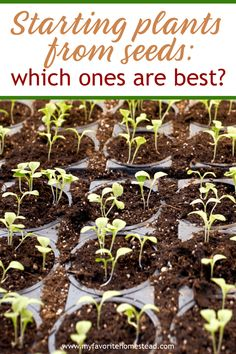Starting a backyard vegetable garden? It can be confusing to know which plants to start from seeds. Maximize your vegetable garden layout when you know which plants perform best started from seeds. Small Herb Gardens, Backyard Vegetable Gardens, Starting A Vegetable Garden, Outdoor Gardens, Indoor Gardening, Container Gardening, Raised Herb Garden, Herb Garden In Kitchen, Herbs Garden
