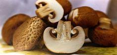 Easy Mushroom (Kalan, Koonu, Khumb, Guchhi) Recipes: Here we have a collection of simple and easy to prepare International and Indian mushroom recipes. We have both vegetarian mushroom recipes and non vegetarian mushroom recipes. Stuffed Mushrooms, Stuffed Peppers, Easy Mushroom Recipes, Mushroom Curry, Trim Healthy Mama Plan, Probiotic Foods, Good Food, Yummy Food, Health
