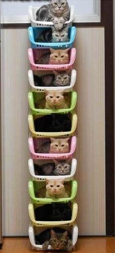 fruteros plástico viejos bonita litera de gatos