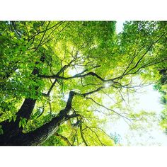 【japan_sky_photographer】さんのInstagramをピンしています。 《#空#sky#skylovers #skyporno#skyviewers #緑#green#森#forest #木漏れ日 #オリンパス#olympus #瑞光#zuiko#m.zuiko#omd #microfourthirds#art #写真家#photographer #japan#自然#natural #beautiful#amazing #sky_photographer #photo_pupa》
