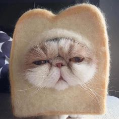 Costumes for Cats 1 - Gallery - Ace Times - Animals Cute Cats Animal Jokes, Funny Animal Memes, Cute Funny Animals, Cute Baby Animals, Cat Memes, Cute Dogs, Funny Cats, Funny Cat Faces, Cute Cats And Kittens