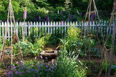 RCP_100526_3676_500.jpg 751×500 pixels David Culp's Garden