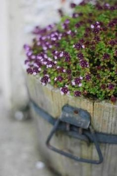 tub of thyme