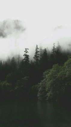 forest, wallpaper, and nature image