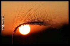 Amazing picture of the sun. I see the sun and the sun sees me.