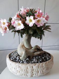 Learn how to grow beautiful healthy and flowering desert roses. Bonsai Art, B . Bonsai Art, Bonsai Garden, Garden Plants, Plantas Bonsai, House Plants Decor, Plant Decor, Planting Roses, Planting Succulents, Dessert Rose Plant