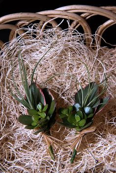 Succulent and airplant boutonnieres by Fiori Floral Design, Seattle.