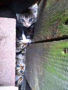 Curious Kittens, can we make it.