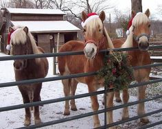 ❤️ Three horses with Santa hats on.