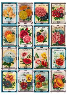 Vintage Flower Seed Packet 16 Labels Collage Sheet by Artgaze