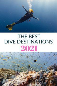 Scuba Destinations, Holiday Destinations, Shark Diving, Best Scuba Diving, Maldives, Mauritius, Tourist Office, Galapagos Islands, Koh Tao