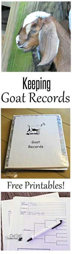 Keeping homestead records is important but it can be overwhelming too. Here's how I handle it - INCLUDES FREE PRINTABLES.