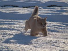 寒冷地仕様もこもこねこさん  |yui_kunの投稿画像