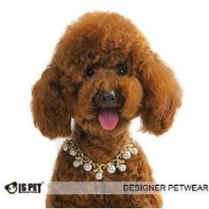 """Amazon.com: Is Pet Designer Pet Jewelry - Duci Pearl Necklace - Size: S (8""""- 10"""") for Dogs and Cats: Pet Supplies"""