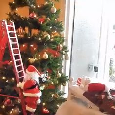 """THIS BELONGS IN EVERY CHRISTMAS TREE!"" Funny Santa climbs to the top of the rope or to the top of the ladder, like Santa in the fairy tale to climb the chimney to give the child a gift, and then auto Ceramic Christmas Trees, Noel Christmas, Christmas Tree Toppers, Rustic Christmas, Xmas Tree, Simple Christmas, Christmas Crafts, Coastal Christmas, Christmas Candles"