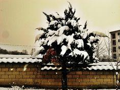 Snow..