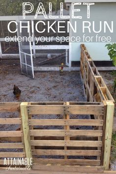 A recycled pallet chicken run is a good way to create more space for your hens to peck. This easy chicken coop extension is a cheap & easy DIY pallet fence. Chicken Fence, Chicken Coop Pallets, Easy Chicken Coop, Portable Chicken Coop, Backyard Chicken Coops, Chicken Runs, Chickens Backyard, Chicken Run Ideas Diy, Urban Chicken Coop