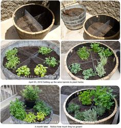 Use old wine barrels with Plexiglass dividers for a herb garden. Decorative enough for the back deck and easy to get to from the kitchen for cooking.