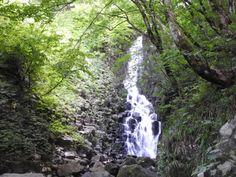 滝を見てきたことと猿を見たこと大尾不動滝新潟県