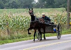 Holmes County, Ohio - Stepping them off. Amish Country Ohio, Horse Wagon, Amish Culture, Holmes County, Amish Community, Spiritual Beliefs, Amish Quilts, Country Life, Horses