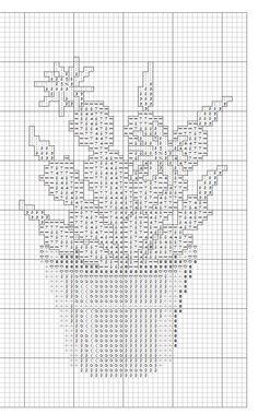kaktusy 7