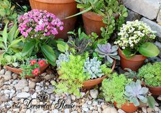 The Decorated House: ~ Summer Gardening and Succulents