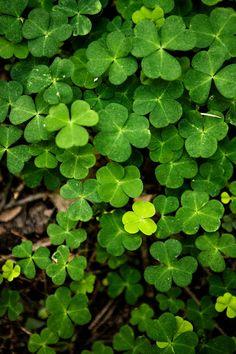 Syötävät villiyrtit – vinkit keräämiseen ja kasveihin | Meillä kotona Plant Leaves, Herbs, Plants, Zero Waste, Herb, Plant, Planets, Medicinal Plants