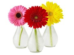 Soak empty Orangina bottles in warm water to peel off labels. Put a gerbera daisy in each and line them up down a table. Simple, cheap & chic.
