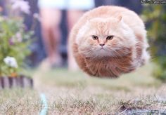 flyball - cat style