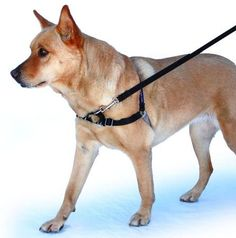 Easy Walk Harness-XL-BLACK * To view further for this item, visit the image link. (This is an affiliate link and I receive a commission for the sales)