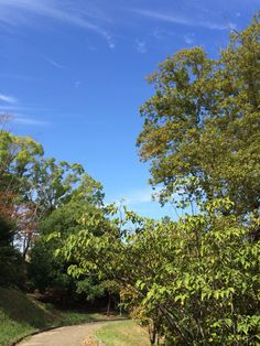 公園 2014.10.10