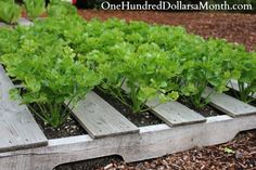 Have you tried pallet gardening?