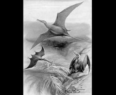 Time Travel_Ramphorhynchus - Early Images of Dinosaurs and Prehistoric Animals for Schools, Crafts, Teachers, Parents and Children