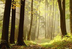 Fotobehang - Bomen & Bos - Forest by sunlight