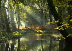 The Enchanted Forest by Moira Swift on 500px
